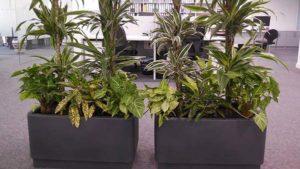 Jardinería en macetas - (entreverde)